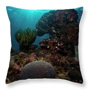 Brains And Crinoids Throw Pillow