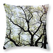 Branches Against Sky In Spring Outback Throw Pillow