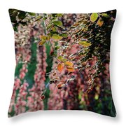 Branches Of A Tree With Colorful Leaves Shining In The Sunlight Throw Pillow