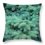 Branches Of Blue Spruce Throw Pillow