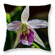 Brassocattleya Orchid Throw Pillow