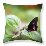 Brave Butterfly  Throw Pillow by Cindy Lark Hartman