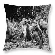 Brazil: Monkeys Throw Pillow