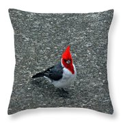 Brazillian Cardinal Throw Pillow