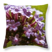 Brazillian Verbena Throw Pillow