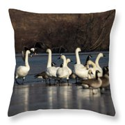 Breaking Up The Party Throw Pillow