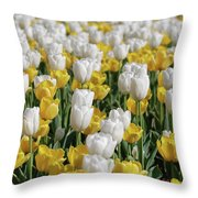 Breathtaking Field Of Blooming Yellow And White Tulips Throw Pillow