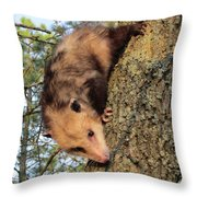 Brer Possum Throw Pillow by David Sutter