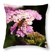 Bridge Of Promise Throw Pillow