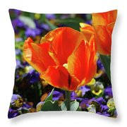 Bright And Colorful Orange And Red Tulip Flowering In A Garden Throw Pillow