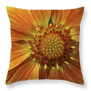 Bright And Sasy Throw Pillow