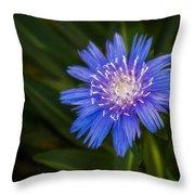 Bright Blue Aster Throw Pillow