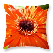 Bright Orange Gerbera  Throw Pillow