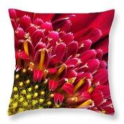 Bright Red Gerbera Daisy Throw Pillow