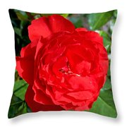 Bright Red Rose At Pilgrim Place In Claremont-california  Throw Pillow