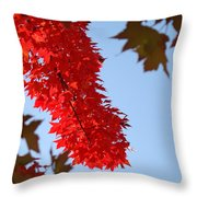 Bright Red Sunlit Autumn Leaves Fall Trees Throw Pillow