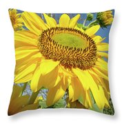 Bright Sunny Happy Yellow Sunflower 10 Sun Flowers Art Prints Baslee Troutman Throw Pillow