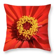 Bright Zinnia Throw Pillow