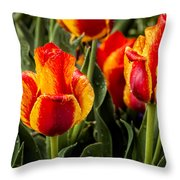 Brightened Day Throw Pillow