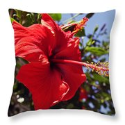 Brightly Colored Hibiscus On The Greek Island Of Mykonos  Throw Pillow