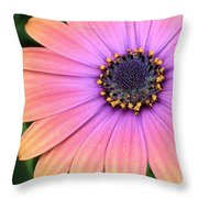 Briliant Colored Daisy Throw Pillow