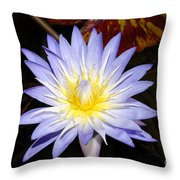 Brilliant Beauty Throw Pillow