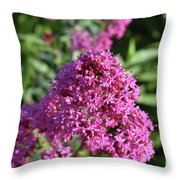 Brilliant Pink Blooming Phlox Flowers In A Garden Throw Pillow