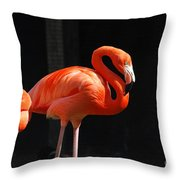 Brilliant Pink Flamingo Throw Pillow