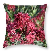 Brilliant Red Blooming Phlox Flowers In A Garden Throw Pillow