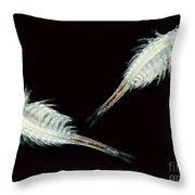Brine Shrimp, Artemia Salina, Lm Throw Pillow