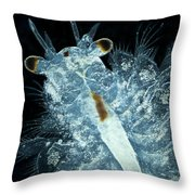Brine Shrimp Artemia Salina Throw Pillow