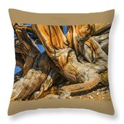 Bristle Cone Pine Tree White Mtns Ca Color Img 6799 Throw Pillow