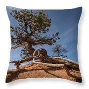 Bristle Cone Tree Throw Pillow