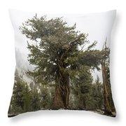 Bristlecone Elder Throw Pillow