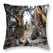 Bristlecone Forest, Ca November 2105 Throw Pillow