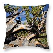 Bristlecone Great Basin Landscape Throw Pillow