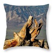 Bristlecone Pine Down Throw Pillow