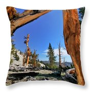 Bristlecone Pine Forest Throw Pillow