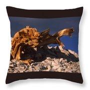 Bristlecone Pine - White Mountains Throw Pillow