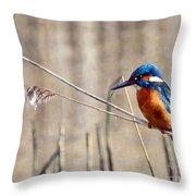 British Kingfisher Throw Pillow