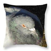 British Pigeon Throw Pillow