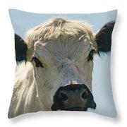 British White Cow Throw Pillow