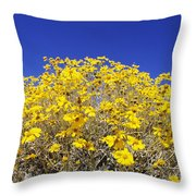 Brittlebush Throw Pillow
