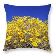 Brittlebush Throw Pillow