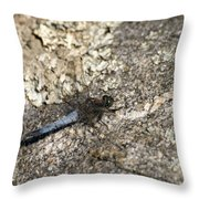 Broad Bodied Chaser Throw Pillow