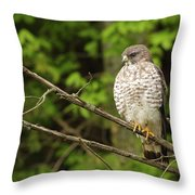 Broad Winged Hawk On The Lookout Throw Pillow