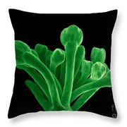 Broccoli, Esem Throw Pillow