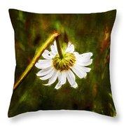 Broken Hearted Oxeye Daisy Asteraceae  Throw Pillow