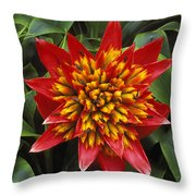 Bromeliad Blooming Throw Pillow