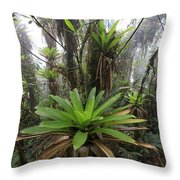 Bromeliad Bromeliaceae And Tree Fern Throw Pillow